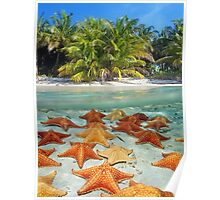 Beach with palm trees and starfish underwater Poster