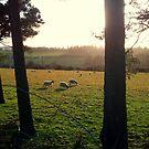 Fields of Wool by Clayton  Turner