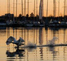 The Golden Takeoff - Swan, Sunset and Yachts at the Marina  Sticker