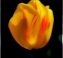 Yellow Tulip by Jeffrey  Sinnock