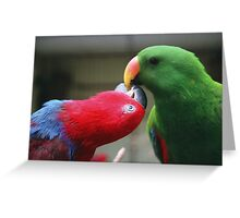 Male and female Eclectus Parrots Greeting Card