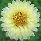 Beautiful Yellow Flower by Sandra Moore