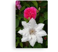 Rose & Clematis Canvas Print