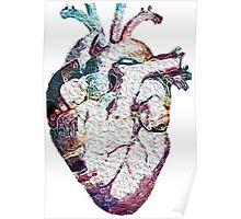 Anatomy - Heart (Oil Paint) Poster
