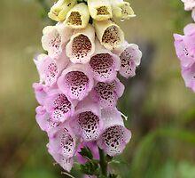 Common Foxclove Flowers by Zosimus