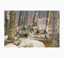 Watchful Timber Wolf Kids Clothes
