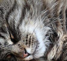 Sleeping Cat by Zosimus
