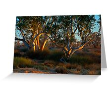 River Red Gums - Cooper Creek, SA Greeting Card