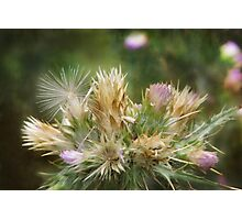Weeds and Wildflowers 1 Photographic Print