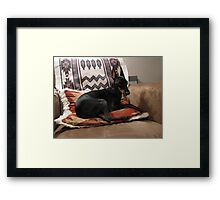 Little Black Dog Framed Print