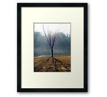 Pale Sunlight Framed Print