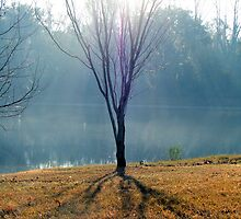 Pale Sunlight: Contrasted by kaitonthekeys