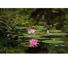 Water-lilies  on a forest lake. Photographic Print