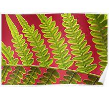 Bracken Fern Leaf Poster
