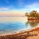 Mangrove Shore by Bill Wetmore