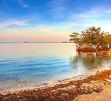 Mangrove Shore by njordphoto
