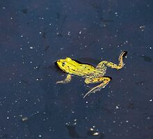 Pond Frog by Zosimus