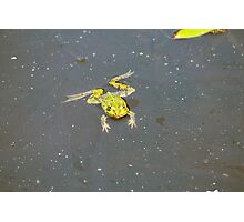 A green pond frog in black water. Photographic Print