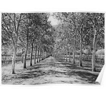 Tree Lane Poster