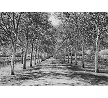 Tree Lane Photographic Print