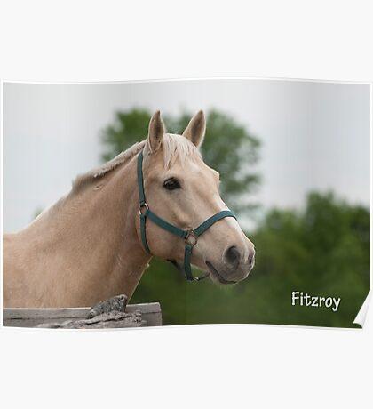 Fitzroy - NNEP Ottawa, ON Poster
