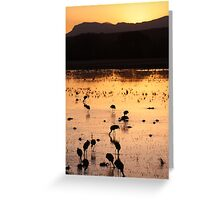 Grey Cranes in migration in New Mexico Greeting Card