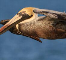 Pelican Glide Sticker