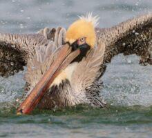 Pelican Bath Sticker
