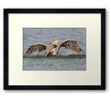 Pelican Bath Framed Print