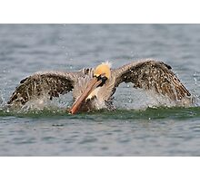 Pelican Bath Photographic Print