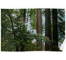Trees and Smoke Poster