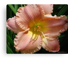 Peach Lily Canvas Print