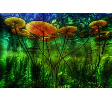 Underwater Lilies Photographic Print