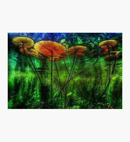 Underwater Lilies Photographic Print