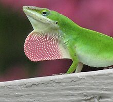 Anole Lizard Male and Bobbing by JeffeeArt4u