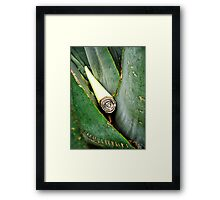 IN ITS GREEN HEARTH Framed Print