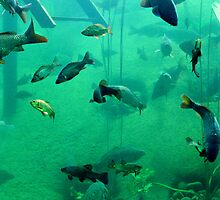 Fish in lake by Nordlys