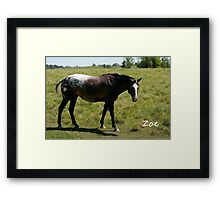 Zoe - NNEP Ottawa, ON Framed Print