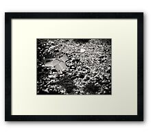 ©AS Flying By IA Monochromatic. Framed Print