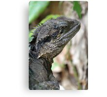 Water dragon - Alma Park Zoo, Brisbane Canvas Print