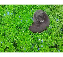 Flower Kitty Photographic Print