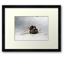 ©NS Spring Time IIIA. Framed Print