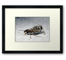 ©NS Spring Time IIA. Framed Print