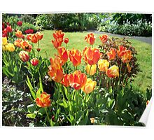 My Neighbors Tulips Poster