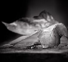 Fallen by Christine  Wilson Photography