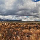 Volcano Panorama, Desert Road, New Zealand by bazcelt