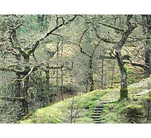 Path into wild woods Snowdonia Photographic Print