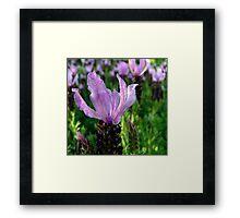Lavender is Lovely Framed Print