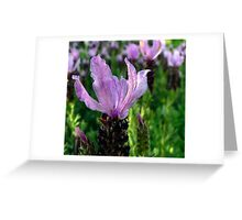 Lavender is Lovely Greeting Card