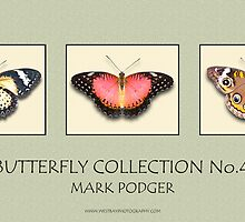 Butterfly Horizontal Collection 4 - Print by Mark Podger